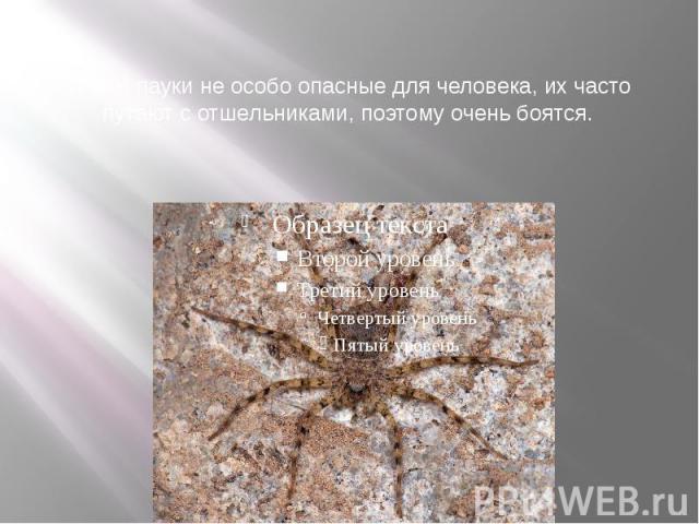 Крабы пауки не особо опасные для человека, их часто путают с отшельниками, поэтому очень боятся.