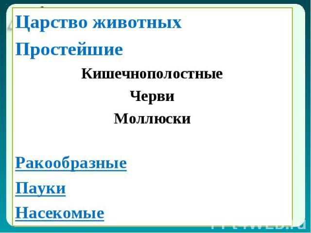 Царство животных Царство животных Простейшие Кишечнополостные Черви Моллюски Ракообразные Пауки Насекомые