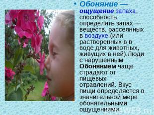 Обоняние— ощущение запаха, способность определять запах— веществ, ра
