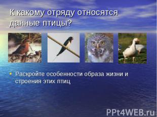 К какому отряду относятся данные птицы? Раскройте особенности образа жизни и стр