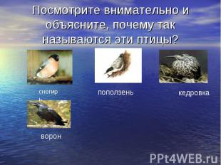 Посмотрите внимательно и объясните, почему так называются эти птицы?
