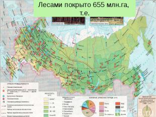 Лесами покрыто 655 млн.га, т.е.