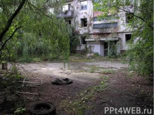 """Чернобыль - это самый эффективный """"заповедник""""."""