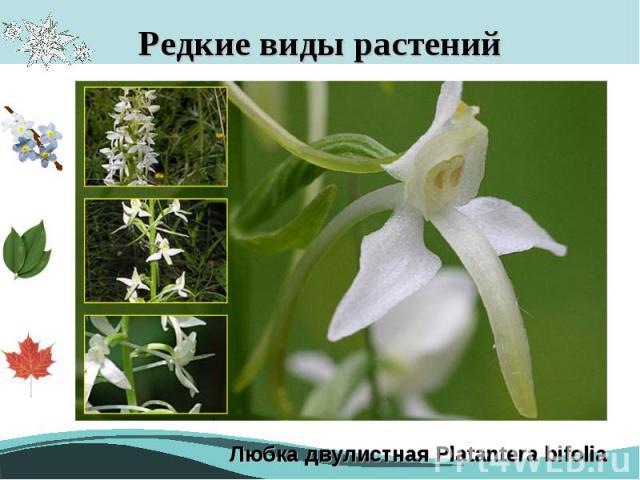 Редкие виды растений