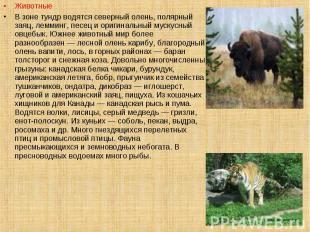 Животные Животные В зоне тундр водятся северный олень, полярный заяц, лемминг, п