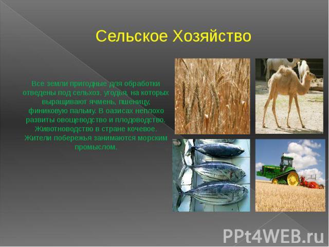 Сельское Хозяйство Все земли пригодные для обработки отведены под сельхоз. угодья, на которых выращивают ячмень, пшеницу, финиковую пальму. В оазисах неплохо развиты овощеводство и плодоводство. Животноводство в стране кочевое. Жители побережья зани…