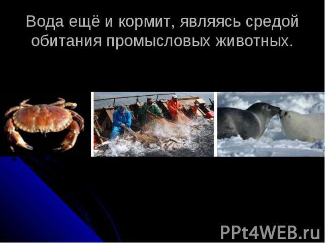 Вода ещё и кормит, являясь средой обитания промысловых животных.