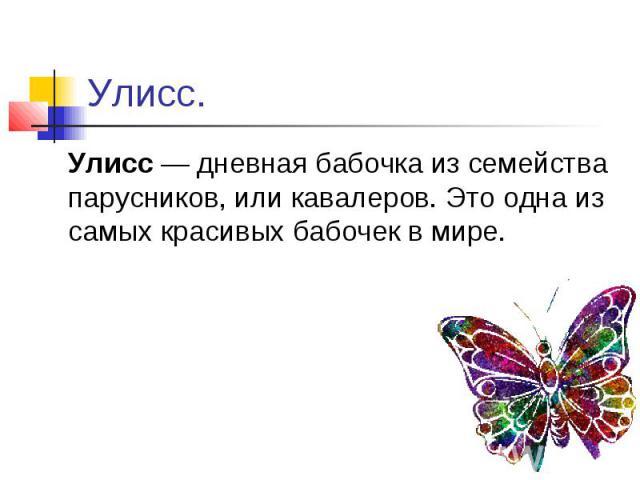 Улисс. Улисс — дневная бабочка из семейства парусников, или кавалеров. Это одна из самых красивых бабочек в мире.