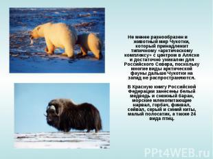 Не менее разнообразен и животный мир Чукотки, который принадлежит типичному «арк