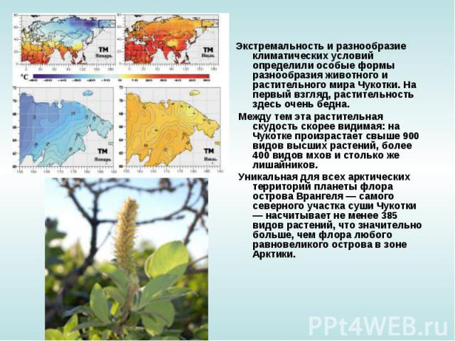 Экстремальность и разнообразие климатических условий определили особые формы разнообразия животного и растительного мира Чукотки. На первый взгляд, растительность здесь очень бедна. Между тем эта растительная скудость скорее видимая: на Чукотке прои…