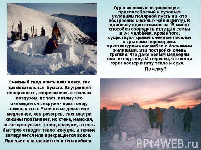 Одно из самых потрясающих приспособлений к суровым условиям полярной пустыни -это построение снежных жилищ(иглу). В одиночку один эскимос за 15 минут способен соорудить иглу для семьи в 3-4 человека. Кроме того, существуют целые снежные поселки с кр…