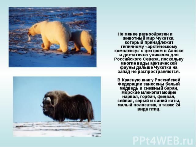Не менее разнообразен и животный мир Чукотки, который принадлежит типичному «арктическому комплексу» с центром в Аляске и достаточно уникален для Российского Севера, поскольку многие виды арктической фауны дальше Чукотки на запад не распространяются…