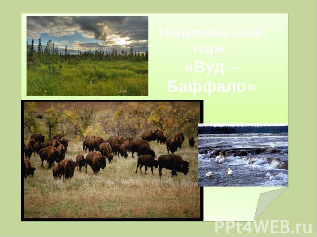 Национальный парк «Вуд – Баффало»