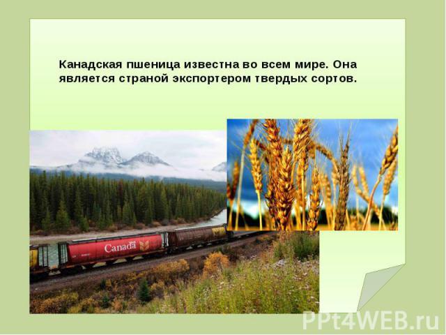 Канадская пшеница известна во всем мире. Она является страной экспортером твердых сортов.