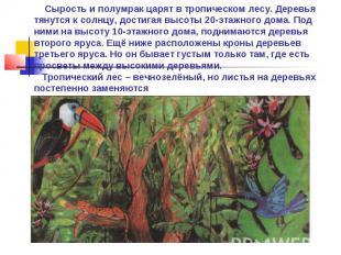 Сырость и полумрак царят в тропическом лесу. Деревья тянутся к солнцу, достигая
