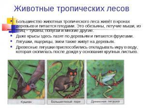 Животные тропических лесов Большинство животных тропического леса живёт в кронах
