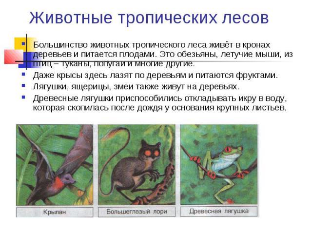 Животные тропических лесов Большинство животных тропического леса живёт в кронах деревьев и питается плодами. Это обезьяны, летучие мыши, из птиц – туканы, попугаи и многие другие. Даже крысы здесь лазят по деревьям и питаются фруктами. Лягушки, яще…