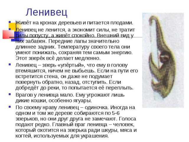 Ленивец Живёт на кронах деревьев и питается плодами. Ленивец не ленится, а экономит силы, не тратит силы попусту, а живёт спокойно. Внешний вид у них забавен. Передние лапы значительно длиннее задних. Температуру своего тела они умеют понижать, сохр…