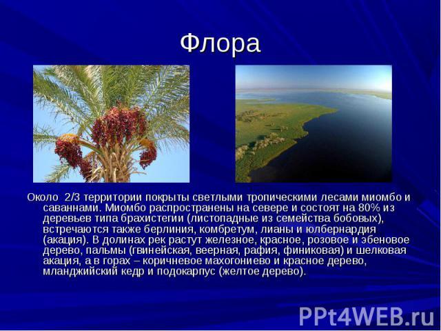 Около 2/3 территории покрыты светлыми тропическими лесами миомбо и саваннами. Миомбо распространены на севере и состоят на 80% из деревьев типа брахистегии (листопадные из семейства бобовых), встречаются также берлиния, комбретум, лианы и юлбернарди…