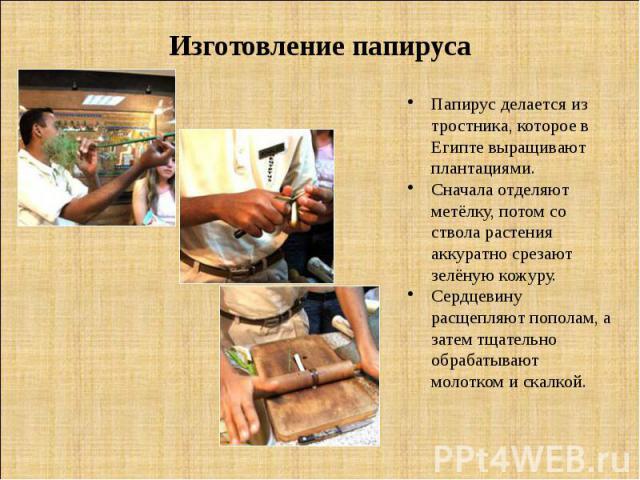 Изготовление папируса Папирус делается из тростника, которое в Египте выращивают плантациями. Сначала отделяют метёлку, потом со ствола растения аккуратно срезают зелёную кожуру. Сердцевину расщепляют пополам, а затем тщательно обрабатывают молотком…