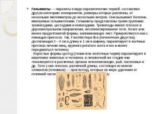 Гельминты — паразиты в виде паразитических червей, составляют другую категорию з