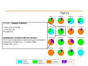 Example : Caspase 8 deletion Example : Caspase 8 deletion ≈ 85% survival (NFkB)