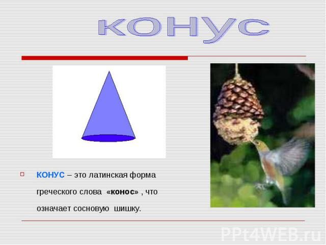 КОНУС – это латинская форма греческого слова «конос» , что означает сосновую шишку. КОНУС – это латинская форма греческого слова «конос» , что означает сосновую шишку.