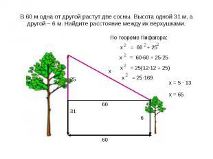 В 60 м одна от другой растут две сосны. Высота одной 31 м, а другой – 6 м. Найди