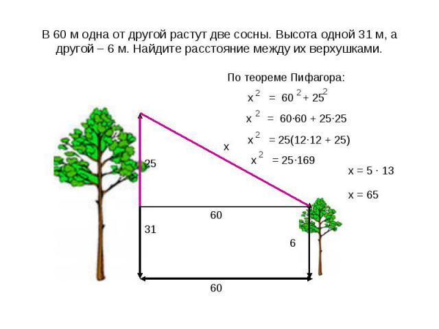 В 60 м одна от другой растут две сосны. Высота одной 31 м, а другой – 6 м. Найдите расстояние между их верхушками.