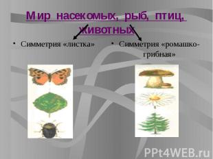 Мир насекомых, рыб, птиц, животных Симметрия «листка»