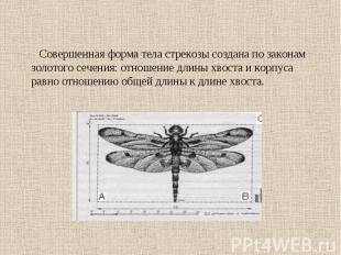 Совершенная форма тела стрекозы создана по законам золотого сечения: отношение д