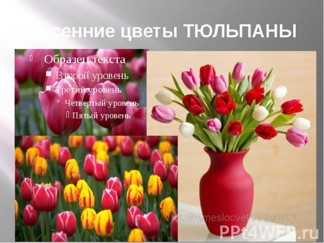 Весенние цветы ТЮЛЬПАНЫ