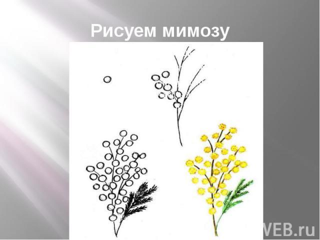 Рисуем мимозу