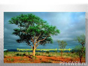 Природный и антропогенный ландшафт