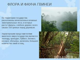 ФЛОРА И ФАУНА ГВИНЕИ На территории государства расположены вечнозеленые влажные