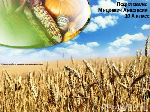 Сельское хозяйство развитых и развивающихся стран