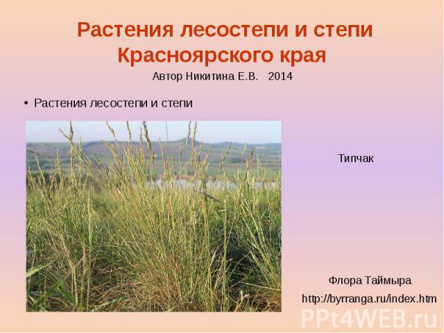 Растения лесостепи и степи Красноярского края Растения лесостепи и степи