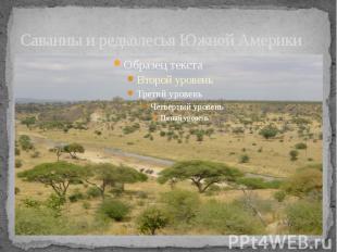 Саванны и редколесья Южной Америки