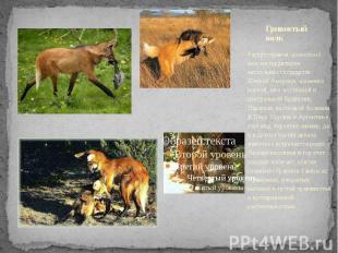Гривистый волк Распространенгривистый волкна территории нескольких г