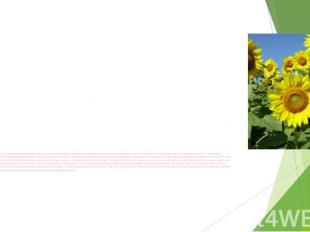 Земледелие. В связи с большим разнообразием культурных растений отраслевой соста