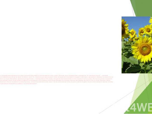 Земледелие. В связи с большим разнообразием культурных растений отраслевой состав земледелия очень сложен. Большую часть продукции дает полеводство. Его ключевая отрасль — зерновое хозяйство. Доля России в мировом производстве зерна составляет около…