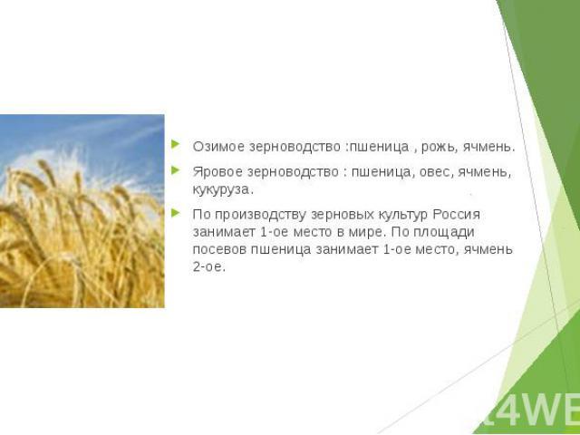 Озимое зерноводство :пшеница , рожь, ячмень. Озимое зерноводство :пшеница , рожь, ячмень. Яровое зерноводство : пшеница, овес, ячмень, кукуруза. По производству зерновых культур Россия занимает 1-ое место в мире. По площади посевов пшеница занимает …