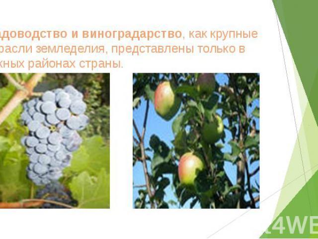 Садоводство и виноградарство, как крупные отрасли земледелия, представлены только в южных районах страны.