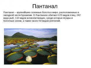 Пантанал Пантанал – крупнейшие сезонные болота в мире, расположенные в западной