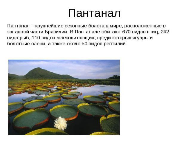 Пантанал Пантанал – крупнейшие сезонные болота в мире, расположенные в западной части Бразилии. В Пантанале обитают 670 видов птиц, 242 вида рыб, 110 видов млекопитающих, среди которых ягуары и болотные олени, а также около 50 видов рептилий.