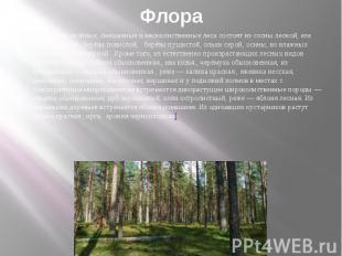 Флора Окрестные хвойные, смешанные и мелколиственные леса состоят из сосны лесно