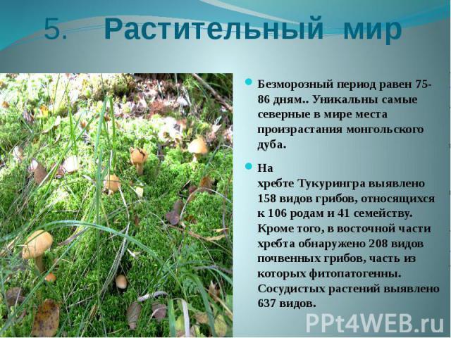 5. Растительный мир Безморозный периодравен 75-86 дням.. Уникальны самые северные в мире места произрастания монгольского дуба. На хребтеТукурингравыявлено 158 видов грибов, относящихся к 106 родам и 41 семейству. Кроме того, в вос…