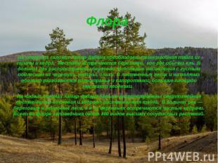 Флора На северных склонах Хамар-Дабана преобладаеттемнохвойная тайга из пи