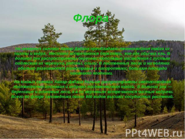 Флора На северных склонах Хамар-Дабана преобладаеттемнохвойная тайга из пихты и кедра. Местами встречаются березняки, кое-где обычна ель. В долинах рек распространены березово-тополевые насаждения с густым подлеском из черемухи, рябины, ольхи.…