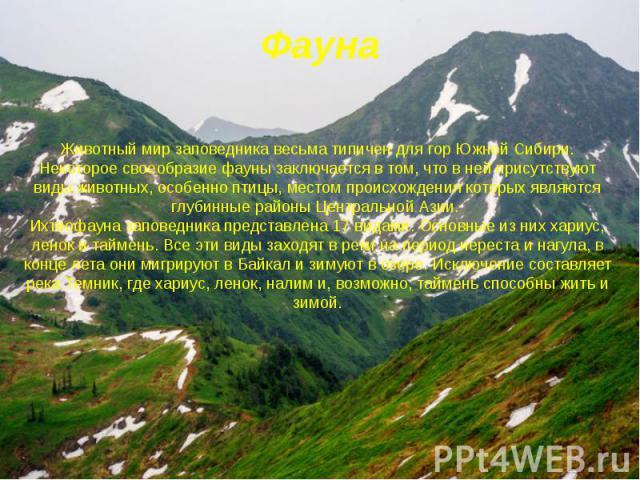 Фауна Животный мир заповедника весьма типичен для гор Южной Сибири. Некоторое своеобразие фауны заключается в том, что в ней присутствуют виды животных, особенно птицы, местом происхождения которых являются глубинные районы Центральной Азии. И…